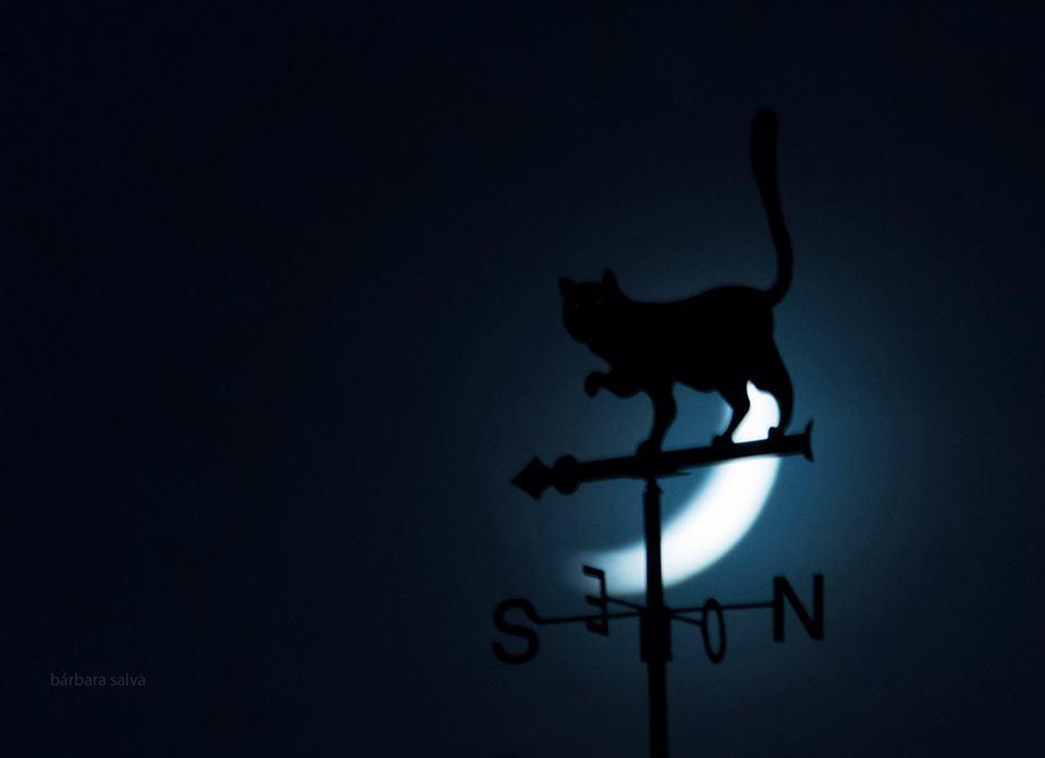 un gato en la noche